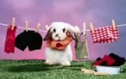 兔子写真特辑 壁纸9 兔子写真特辑 动物壁纸