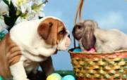 兔子写真特辑 壁纸10 兔子写真特辑 动物壁纸