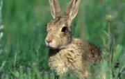 兔子写真特辑 壁纸12 兔子写真特辑 动物壁纸