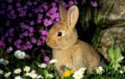 兔子写真特辑 壁纸13 兔子写真特辑 动物壁纸