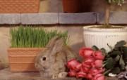 兔子写真特辑 壁纸14 兔子写真特辑 动物壁纸
