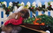 兔子写真特辑 壁纸15 兔子写真特辑 动物壁纸