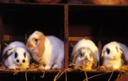 兔子写真特辑 壁纸17 兔子写真特辑 动物壁纸