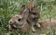 兔子写真特辑 壁纸18 兔子写真特辑 动物壁纸