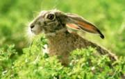 兔子写真特辑 壁纸19 兔子写真特辑 动物壁纸