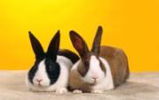 兔子写真特辑 壁纸23 兔子写真特辑 动物壁纸