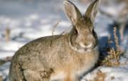 兔子写真特辑 壁纸25 兔子写真特辑 动物壁纸