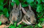 兔子写真特辑 壁纸26 兔子写真特辑 动物壁纸