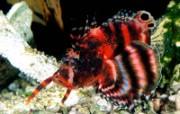 Webshots海底 动物壁纸