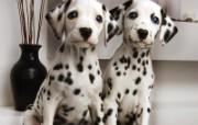 Webshots最新壁纸动物篇 动物壁纸