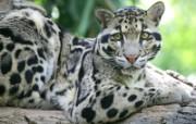 Webshots最新动物篇 动物壁纸