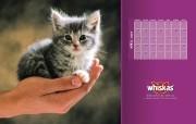 伟嘉猫粮小猫壁纸 动物壁纸