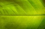 微距植物宽屏壁纸 1 动物壁纸