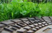 微距植物摄影高清壁纸 壁纸20 微距植物摄影高清壁纸 动物壁纸