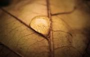 微距植物摄影高清壁纸 壁纸21 微距植物摄影高清壁纸 动物壁纸