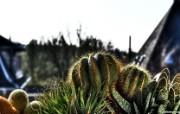 微距植物摄影高清壁纸 壁纸23 微距植物摄影高清壁纸 动物壁纸