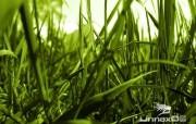 微距植物摄影高清壁纸 壁纸24 微距植物摄影高清壁纸 动物壁纸