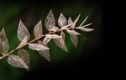 微距植物摄影高清壁纸 壁纸36 微距植物摄影高清壁纸 动物壁纸