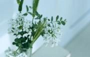 温馨的室内的花朵壁纸 动物壁纸
