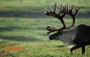 Wild Kingdom 野生动物王国高清壁纸 动物壁纸