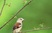 五彩小鸟 动物壁纸