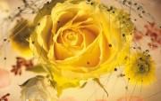 鲜花锦簇2 动物壁纸