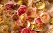 鲜花写真特辑壁纸 壁纸22 鲜花写真特辑壁纸 动物壁纸
