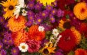 鲜花写真特辑壁纸 壁纸32 鲜花写真特辑壁纸 动物壁纸