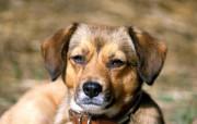 小狗壁纸 动物壁纸