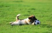 可爱小狗狗壁纸 狗狗咬足球 顽皮小狗狗壁纸 小狗狗的郊游 动物壁纸