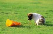 可爱小狗狗壁纸 顽皮小狗狗 公园里的狗宝宝壁纸 小狗狗的郊游 动物壁纸