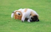 可爱小狗狗壁纸 可爱小狗狗壁纸 公园里的午睡 小狗狗的郊游 动物壁纸