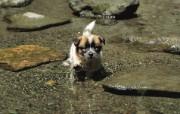 可爱小狗狗壁纸 可爱小狗狗壁纸 在池塘玩水 小狗狗的郊游 动物壁纸