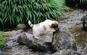 可爱小狗狗壁纸 可爱小狗狗壁纸 小冒险 小狗狗的郊游 动物壁纸