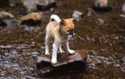 可爱小狗狗壁纸 胆小狗狗 公园散步的小狗狗壁纸 小狗狗的郊游 动物壁纸