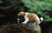 可爱小狗狗壁纸 可爱小狗狗壁纸 狗狗口渴了 小狗狗的郊游 动物壁纸