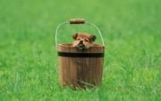 可爱小狗狗壁纸 可爱小狗狗壁纸 木桶里的小狗狗 小狗狗的郊游 动物壁纸