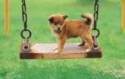 可爱小狗狗壁纸 可爱小狗狗壁纸 狗狗荡秋千 小狗狗的郊游 动物壁纸