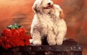 小狗写真壁纸 动物壁纸