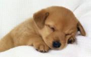 小狗写真壁纸特辑 动物壁纸
