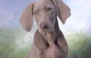 小狗写真第十七辑 动物壁纸