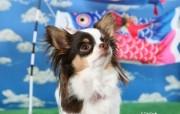 小猫小狗可爱插画壁纸 动物壁纸