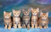 小猫写真3 动物壁纸