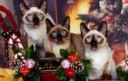 小猫写真4 壁纸2 小猫写真4 动物壁纸