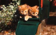 小猫写真4 壁纸6 小猫写真4 动物壁纸