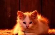 小猫写真4 壁纸7 小猫写真4 动物壁纸