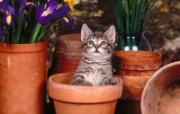 小猫写真4 壁纸11 小猫写真4 动物壁纸