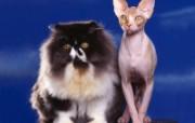 小猫写真4 壁纸12 小猫写真4 动物壁纸