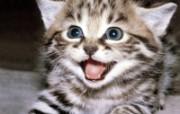 小猫写真4 壁纸13 小猫写真4 动物壁纸