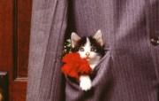 小猫写真4 壁纸14 小猫写真4 动物壁纸